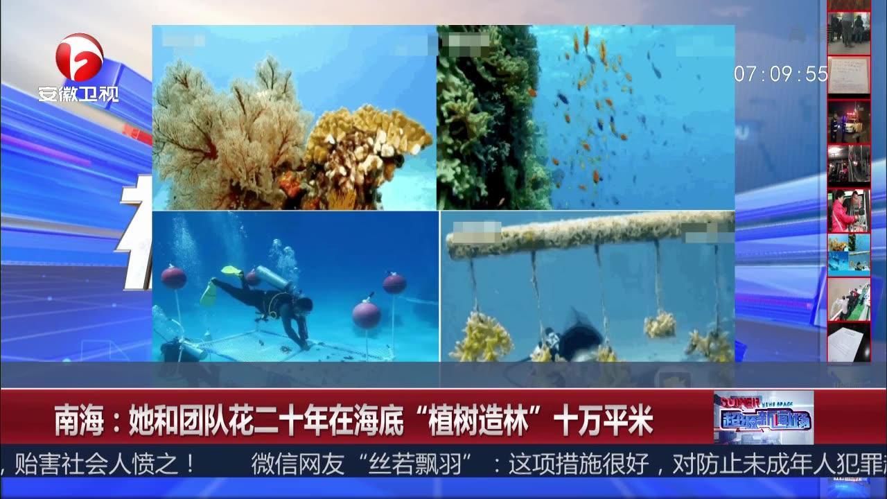 """南海:她和团队花二十年在海底""""植树造林""""十万平米"""